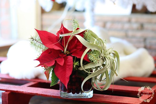 Poinsettias — Photo by Mandy Stansberry Photography, Floral design by Madeline's Flowers in Edmond, Oklahoma | by Flower Factor