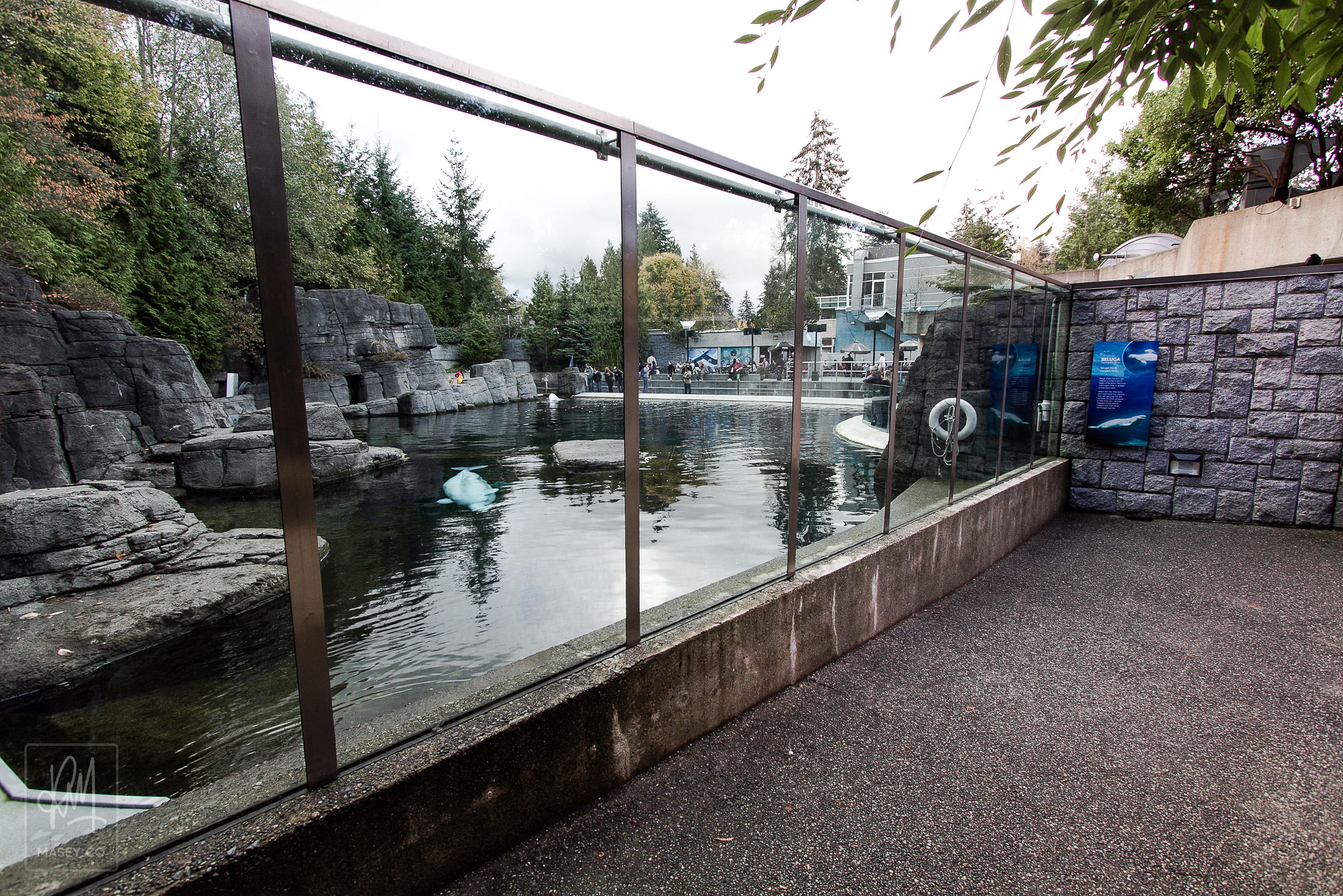Keep your eyes peeled for this free viewing area of the Vancouver Aquarium