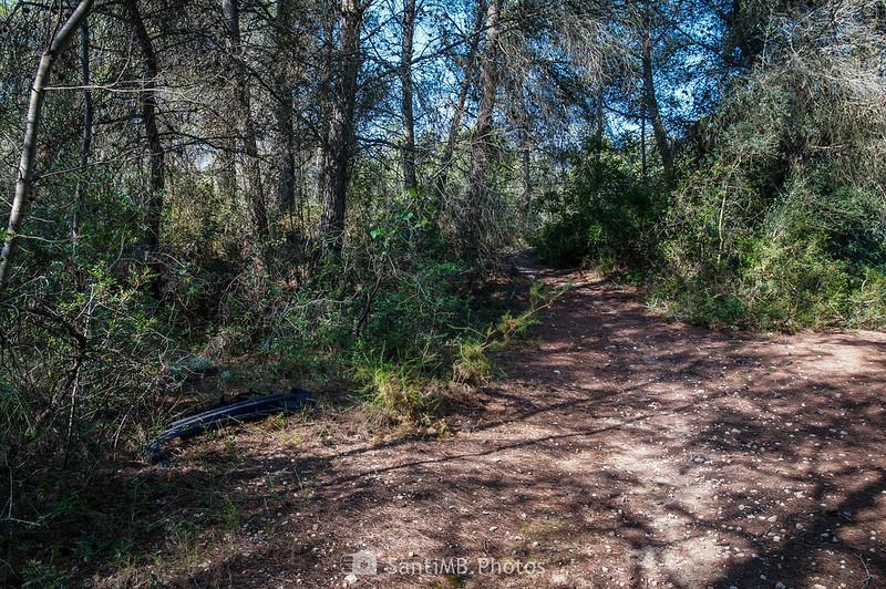 Camino en un bosque de Bellvei