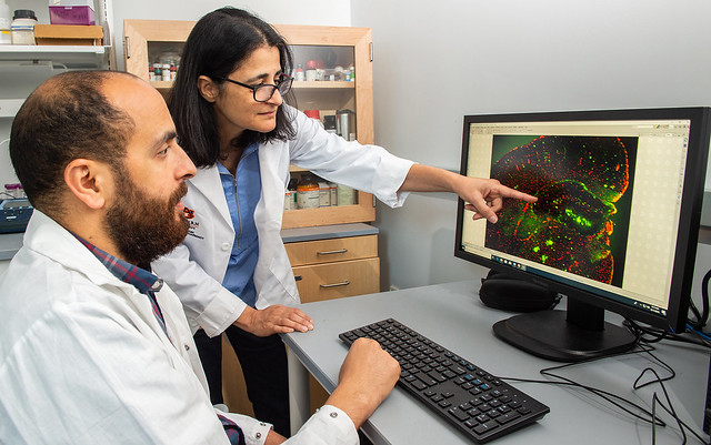 Professor Amal Kaddoumi, standing, looks over imaging from a microscope with graduate student Youssef Mousa.