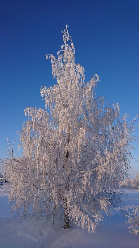 Деревенская зимняя природа