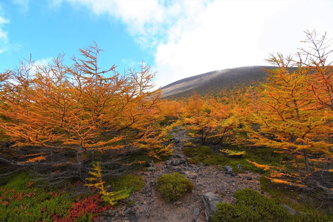 浅間山 落葉松の黄葉