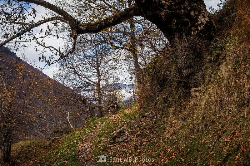 Pasando bajo un roble en la Val de Toran