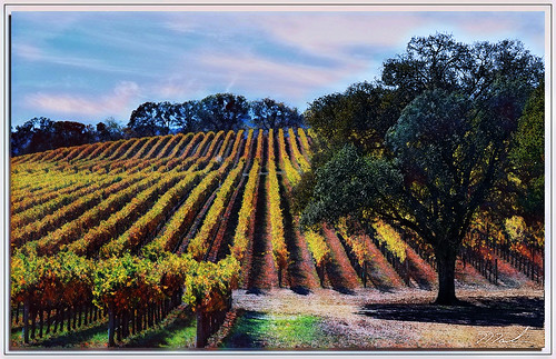 Vineyard Play | by A Work of Mark