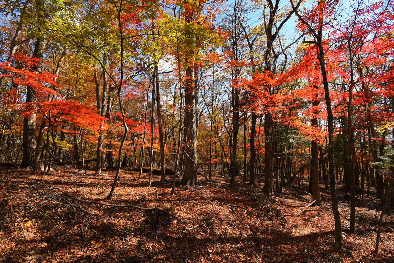 大マテイ山の紅葉