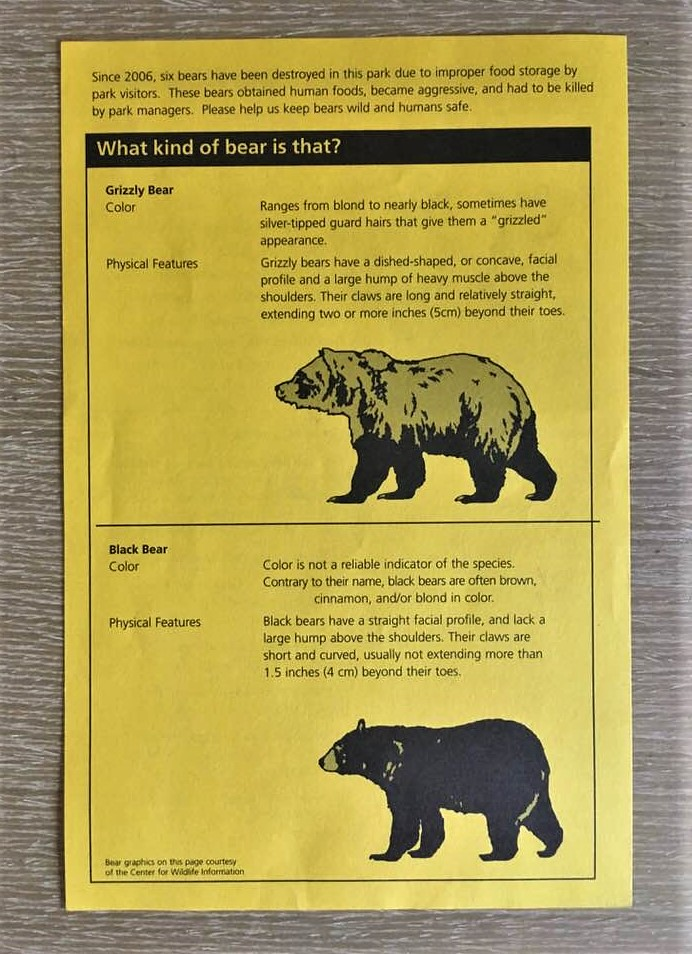 傳單上關於黑熊及棕熊的特徵和習性,讓遊客對熊有初步的認識。
