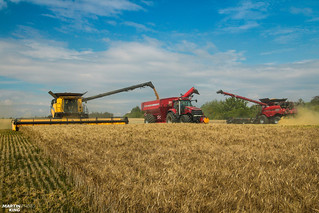 CTF Wheat Harvest | CASE IH // NEW HOLLAND // HORSCH | by martin_king.photo