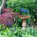 Lush Bundanoon garden