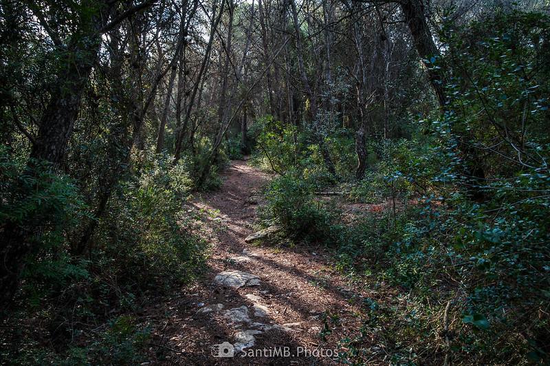 Bosc de Les Comes