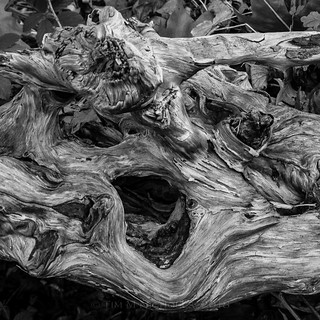 Gnarly | by ammonyte