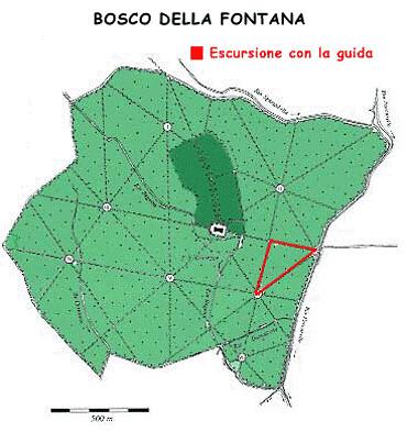 Bosco della fontana