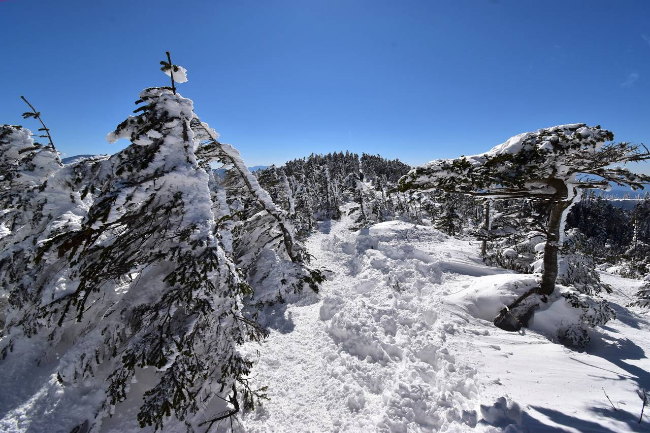 モフモフの北横岳登山道