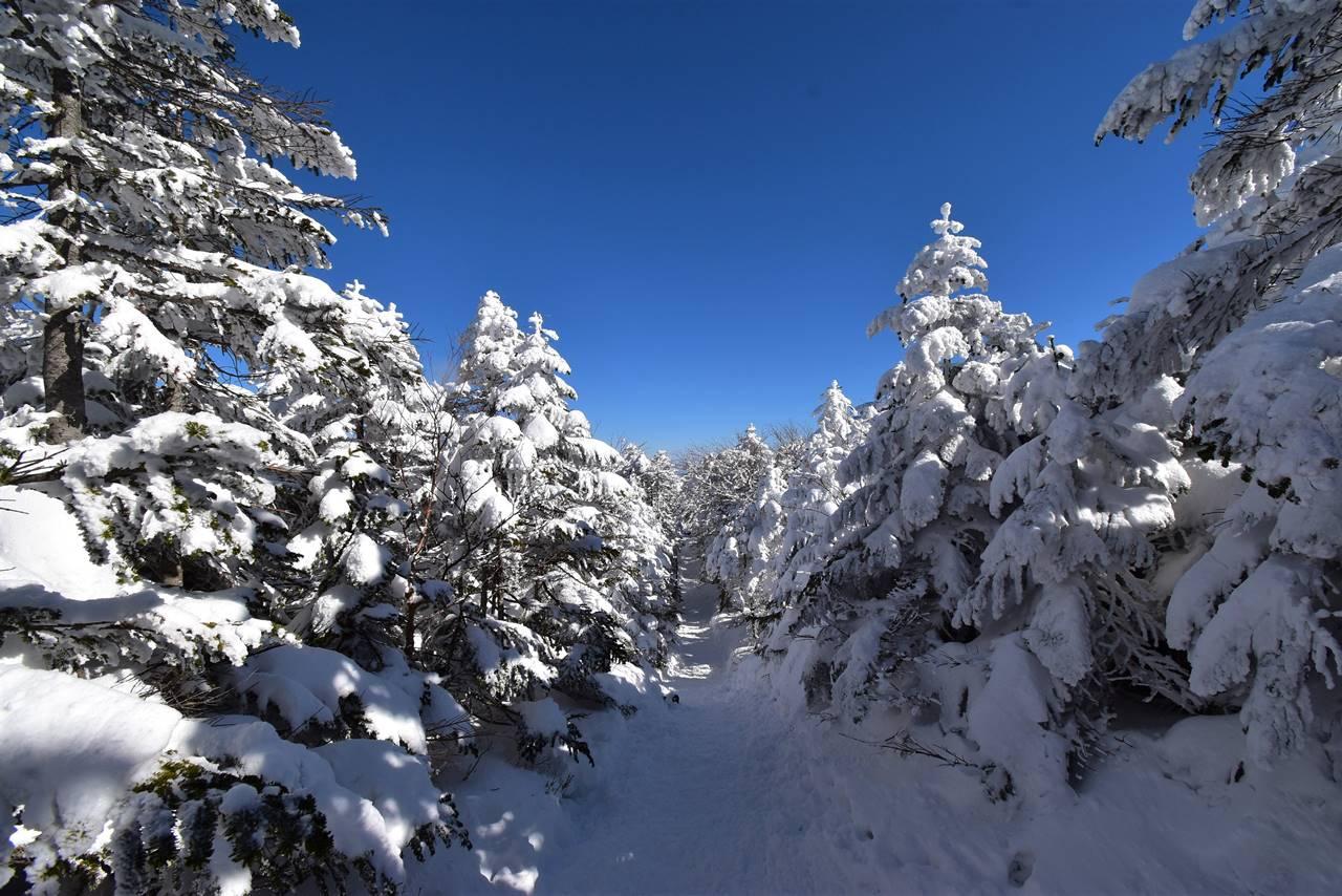 冬の北横岳登山 森の一本道