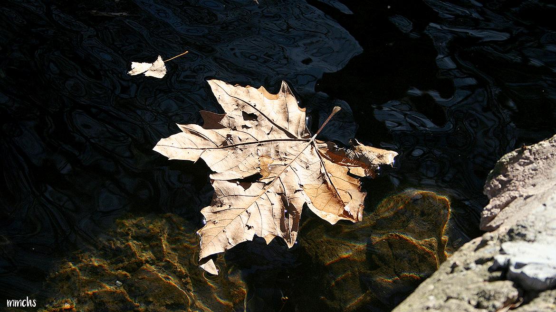 hoja caída en el río