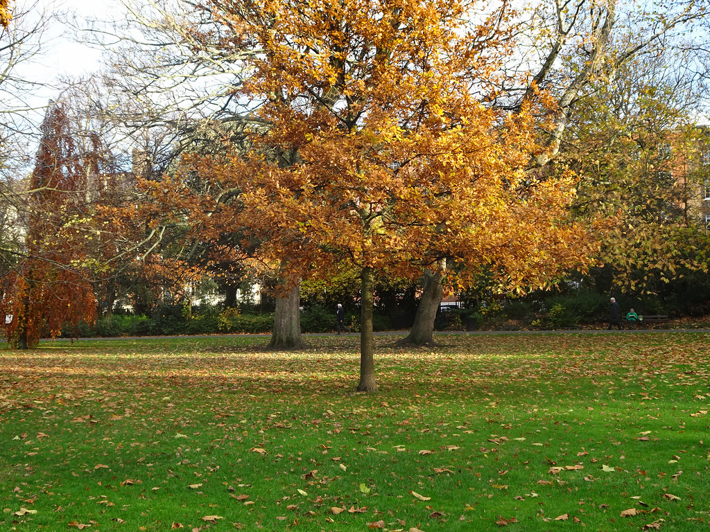 ST. STEPHEN'S GREEN IN AUTUMN 005