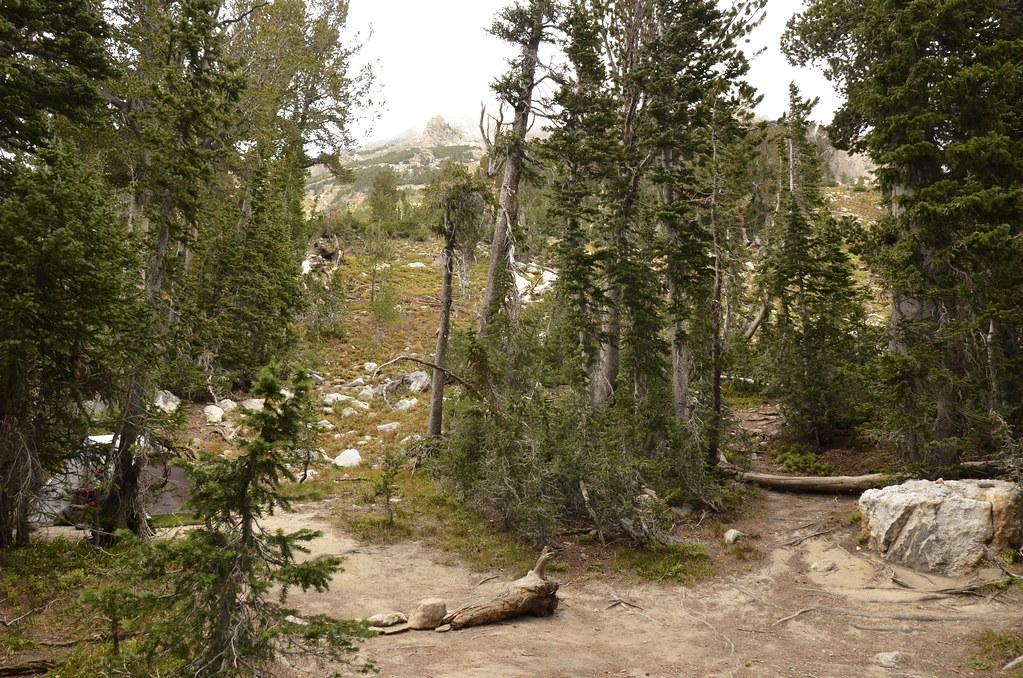 左邊是我們的帳篷,右邊小路內的樹林充滿熊打滾過的痕跡。
