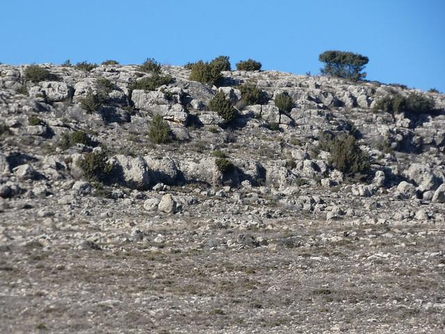 Paramera de Blancas (Comarca del Jiloca, Teruel)