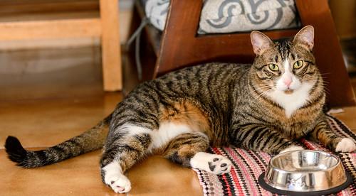 Efrén, gatito blanquipardo súper dulce positivo a inmuno nacido en Septiembre´17, en ADOPCIÓN ESPECIAL. Valencia. 31281740497_9b4d2c2710