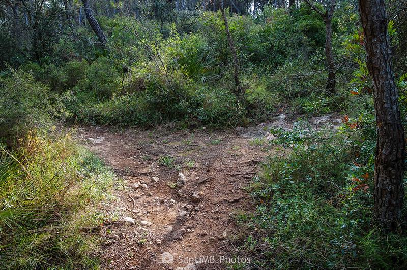 Bifurcación en el Bosc de Les Comes