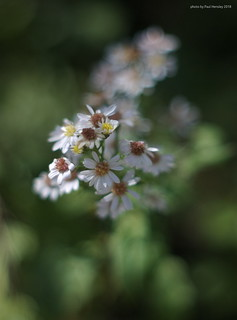 tiny flowers | by pvh photo