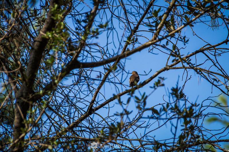 Pájaro en el Bosc de Les Comes