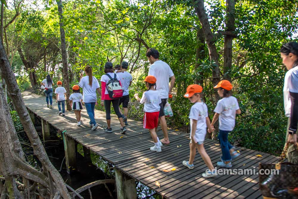 Мангры мангровый лес