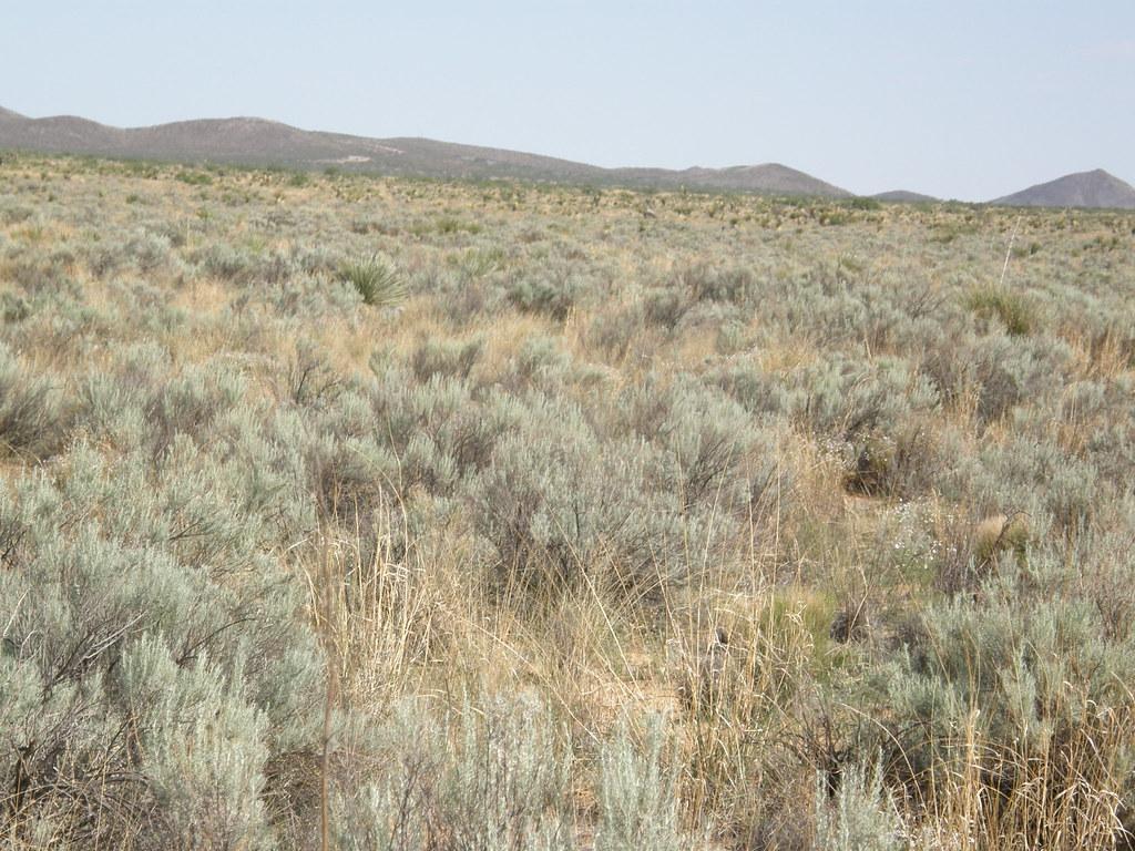 沙丘地景中較完整的草生環境(攝影:林大利)