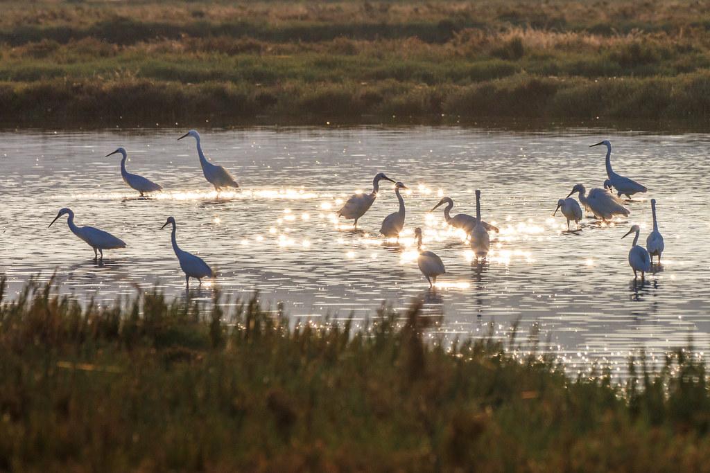Tatsuya Amano等人運用上千名志工蒐集到的水鳥資料,分析世界各地濕地生物多樣性與當地政府的保育政策關聯。圖片來源:envato