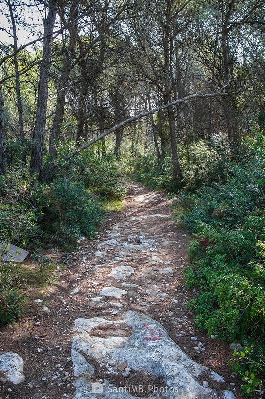 Bosque de la Muntanya de Francisquet