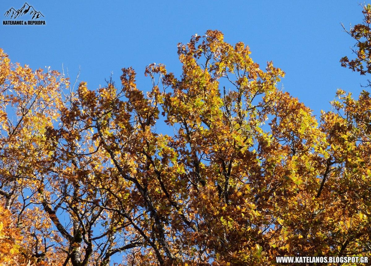 φυλλοβόλα δέντρα βελανιδιές φθινόπωρο