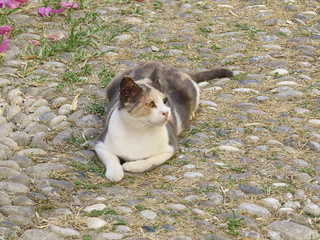 Часть 4. Коты и кошки Родоса.