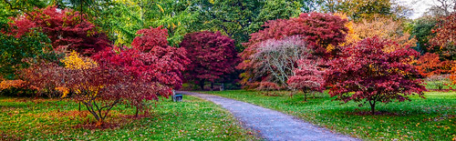 Red at Westonbirt | by Phil Gate Keeper