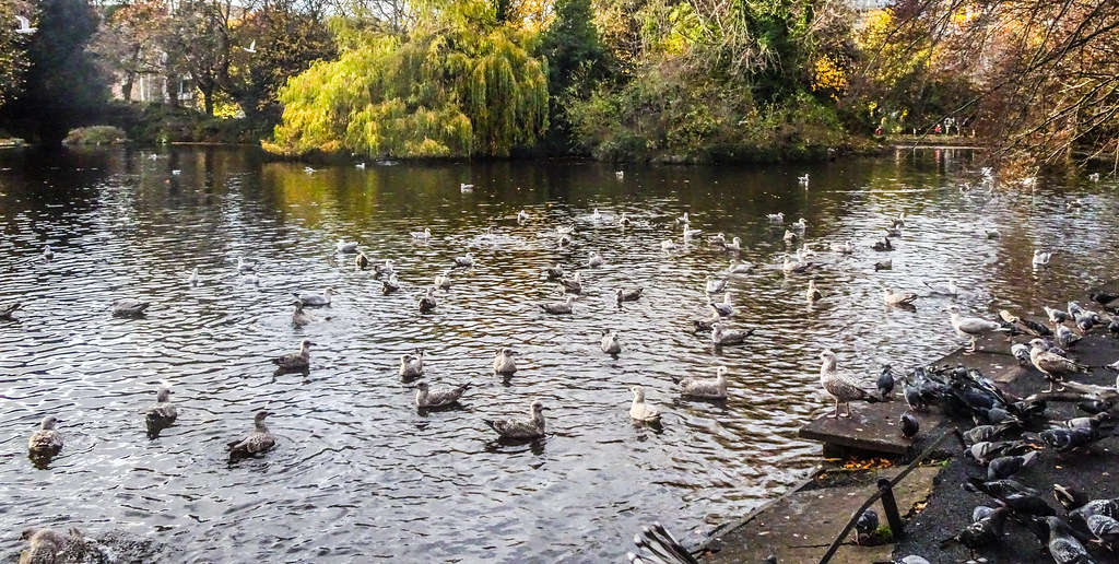ST. STEPHEN'S GREEN IN AUTUMN 021