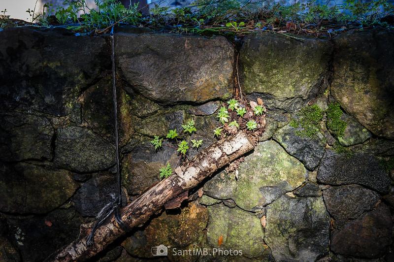Muro de la masía de la Canova