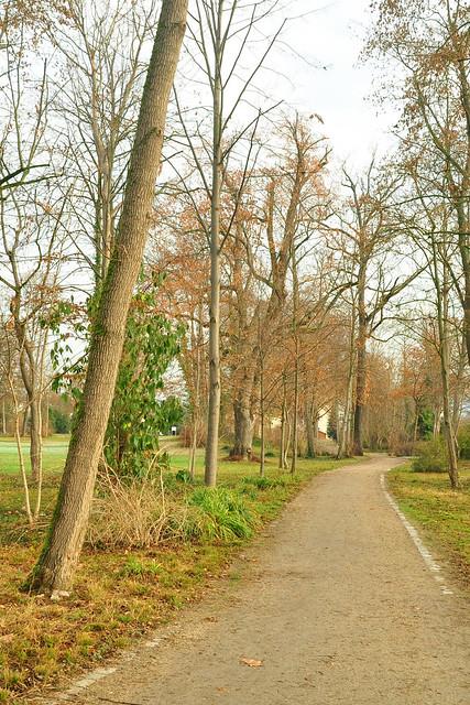 Dezemberspaziergang im Schlosspark Neckarhausen ... Fotos: Brigitte Stolle