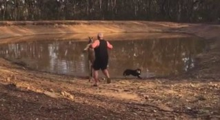 Guy Tries To Scare Kangaroo Away From His Dogs, Gets Kicked Over | by mbh16