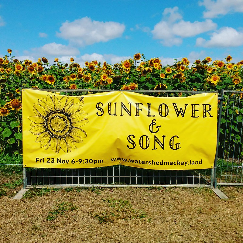 sunflower and song banner