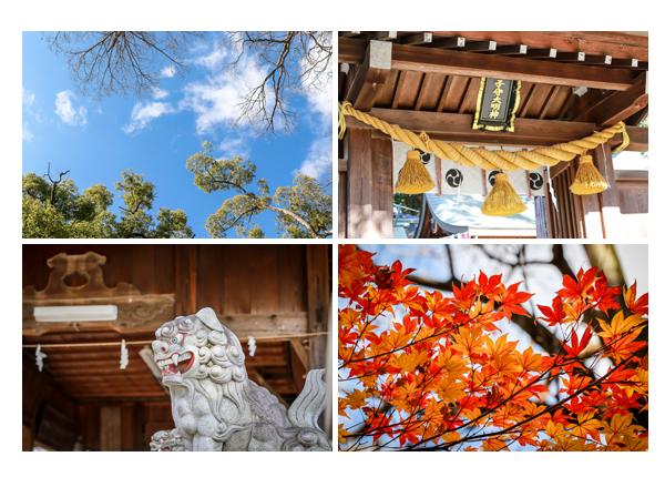 秋の挙母神社 紅葉するモミジ 愛知県豊田市
