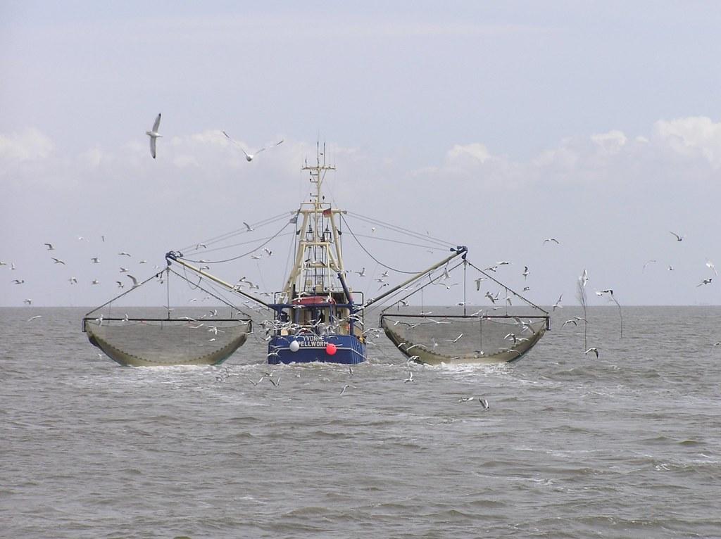 北海作業的拖網漁船。圖片來源:Jom at German Wikipedia(CC BY-SA 2.0 de)