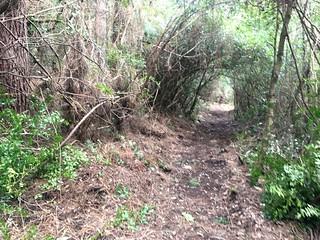 Le chemin à la descente au retour des travaux à l'approche du roncier