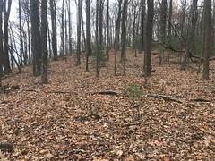 Open Woods on Big John Dick Mountain