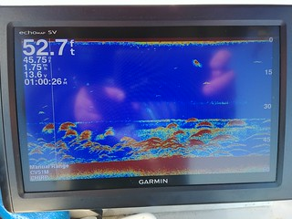 Photo of Depth finder screen showing white perch and striped bass holding deep and close to the bottom