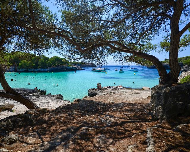 Pinares con playas paradisíacas en Menorca