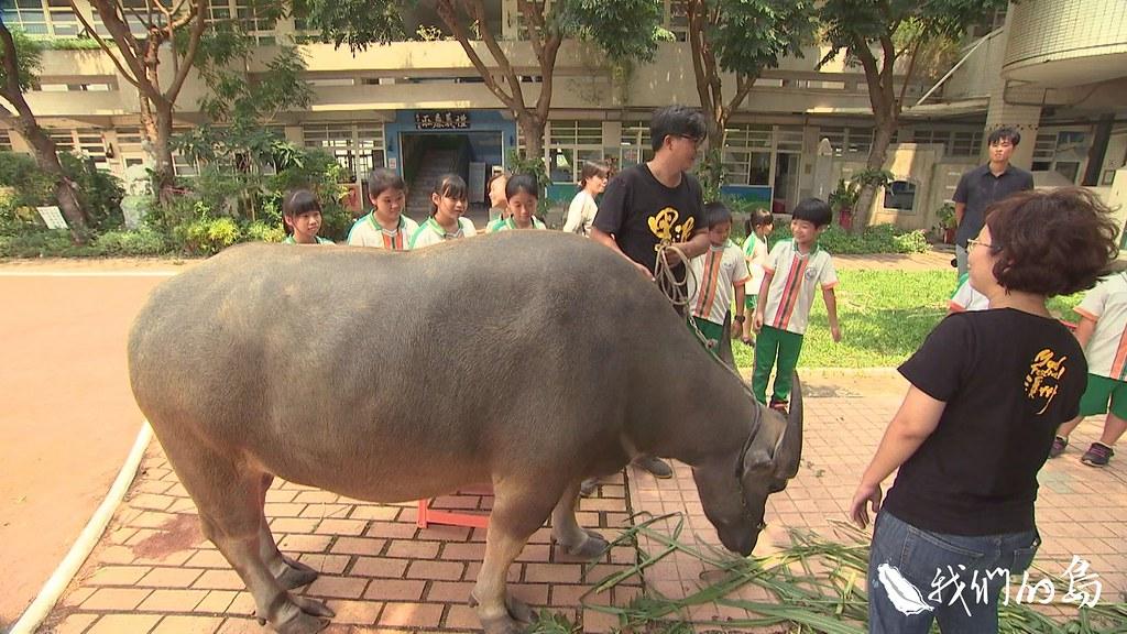 高一鑫和莿仔埤圳產業文化協會合作,帶著拉拉走入小學,讓農村裡的孩子,認識耕牛文化。