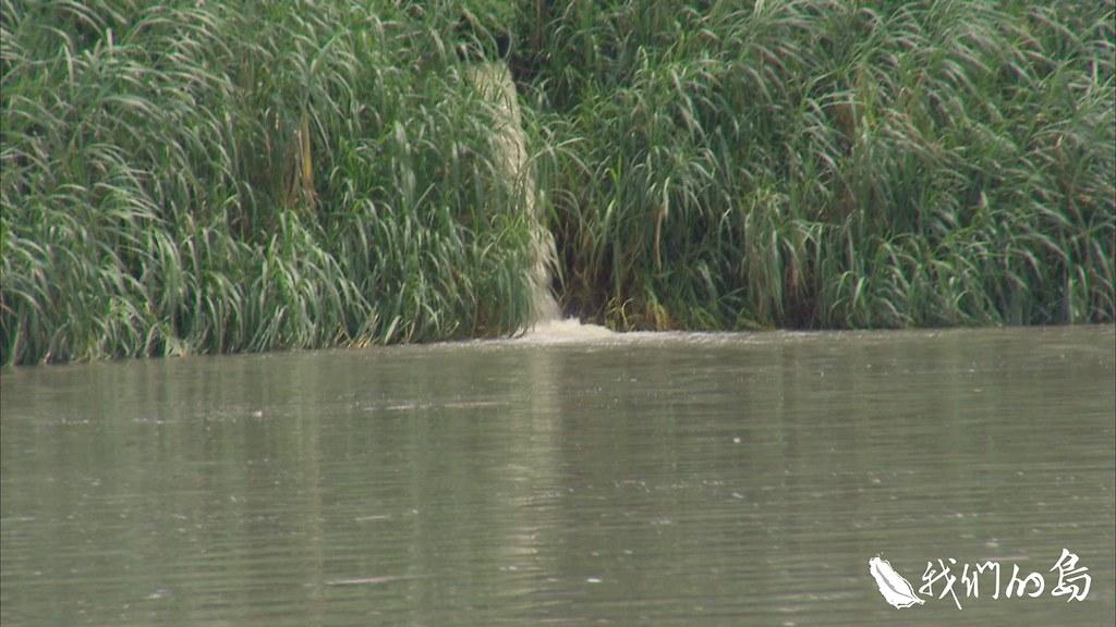 陳建志認為淡水河仍有基本面的問題沒被處理,包括污水和底泥,導致自淨能力難以提升。