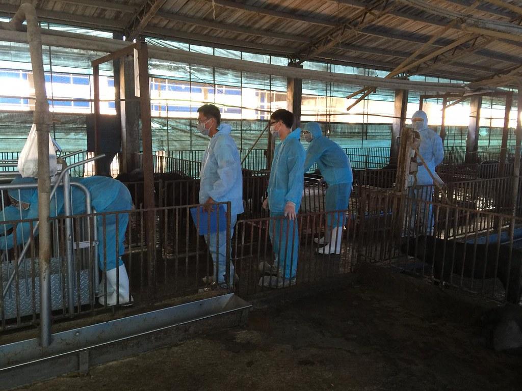 畜試所設計的飼料配方目前正在實驗當中。