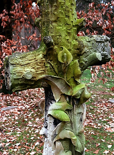 "Cincinnati - Spring Grove Cemetery & Arboretum ""Cross"" 