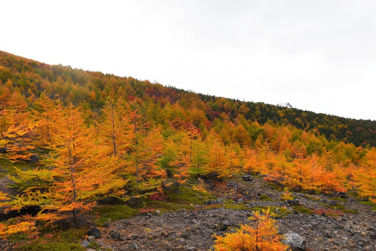 浅間山の凄まじい紅葉風景