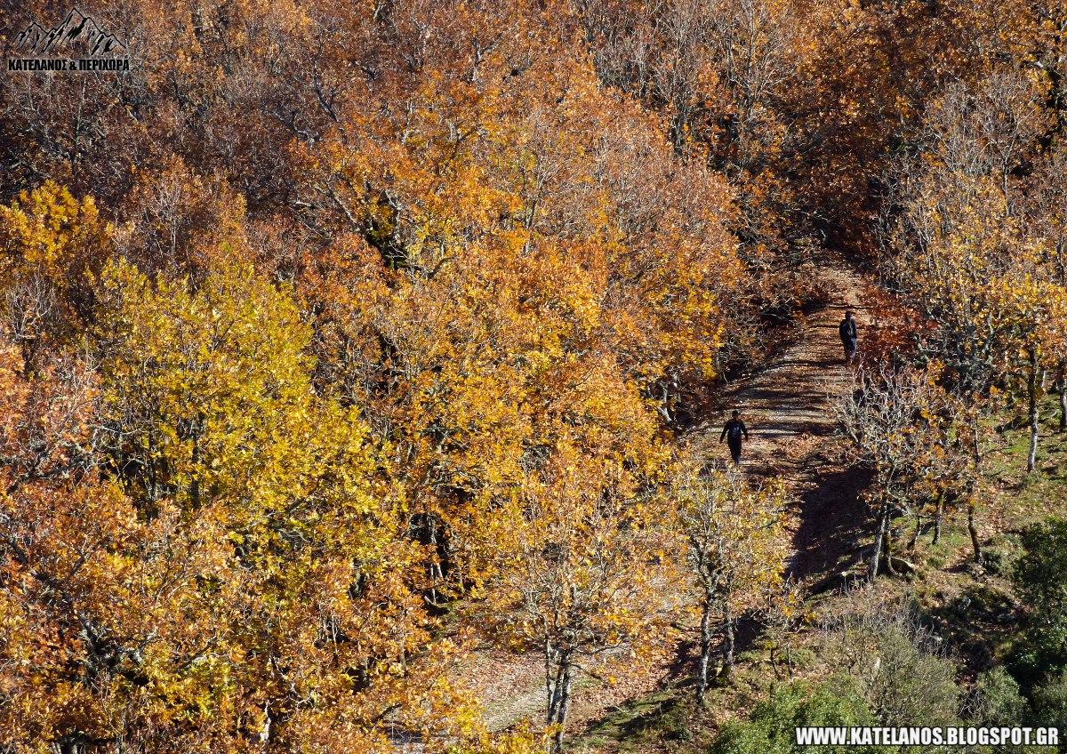 πεζοπορια αρακυνθος φθινοπωρο δασος βελανιδιες