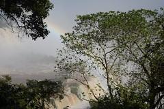 Iguazu National Park Brazil - 041